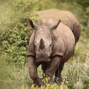 Young Rhino by capturedbybrook