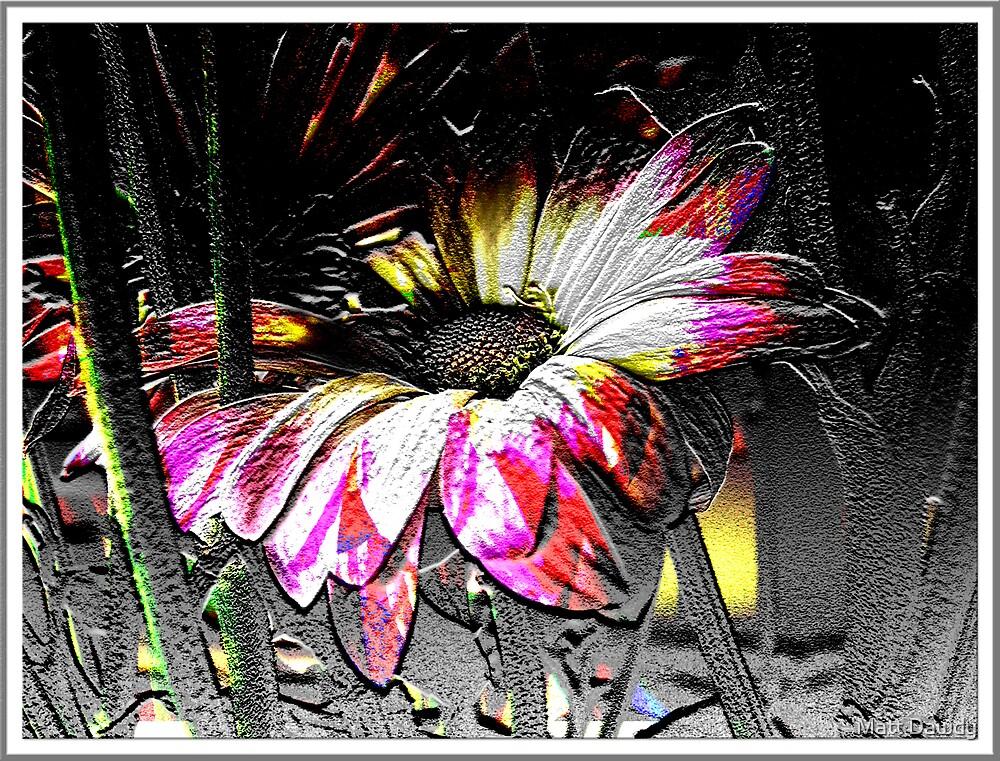 White Flower by Matt Dawdy
