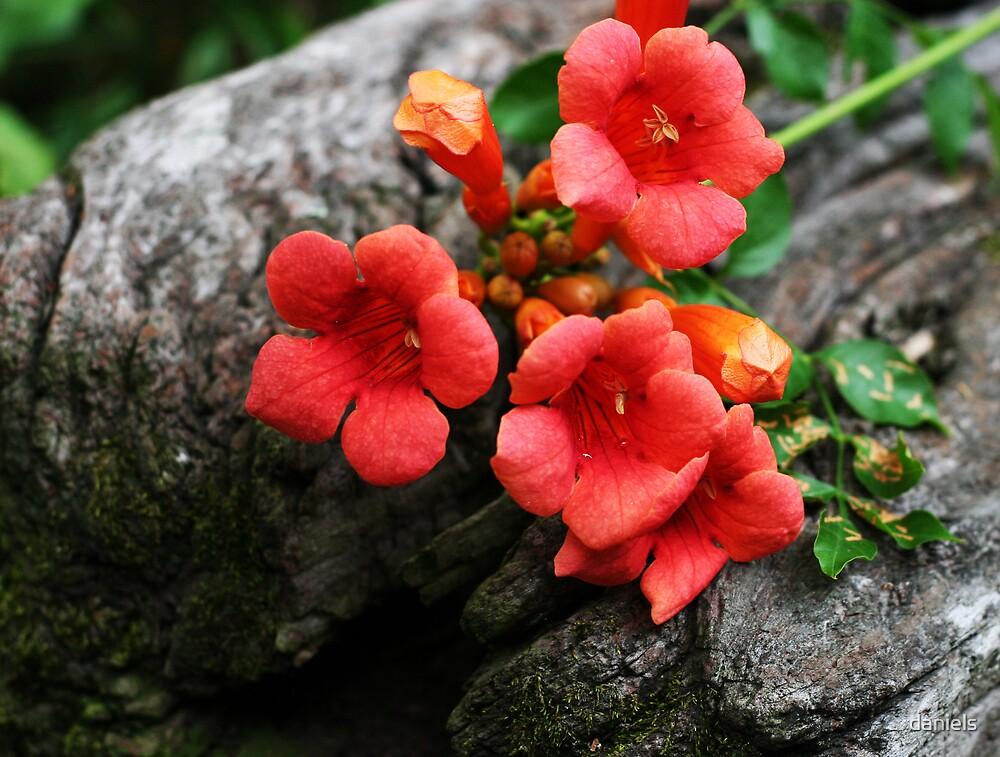 wildflower on wood by daniels