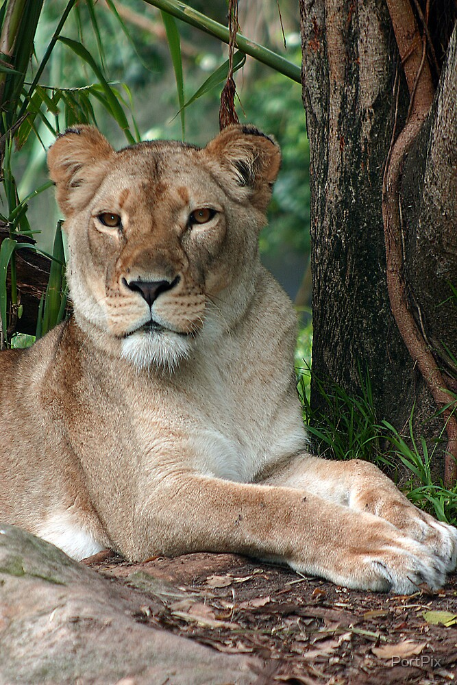 Queen of the Jungle by PortPix