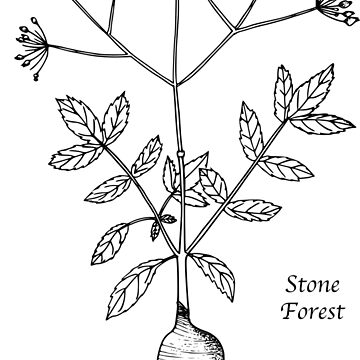 Rooted Botanical by StoneForest