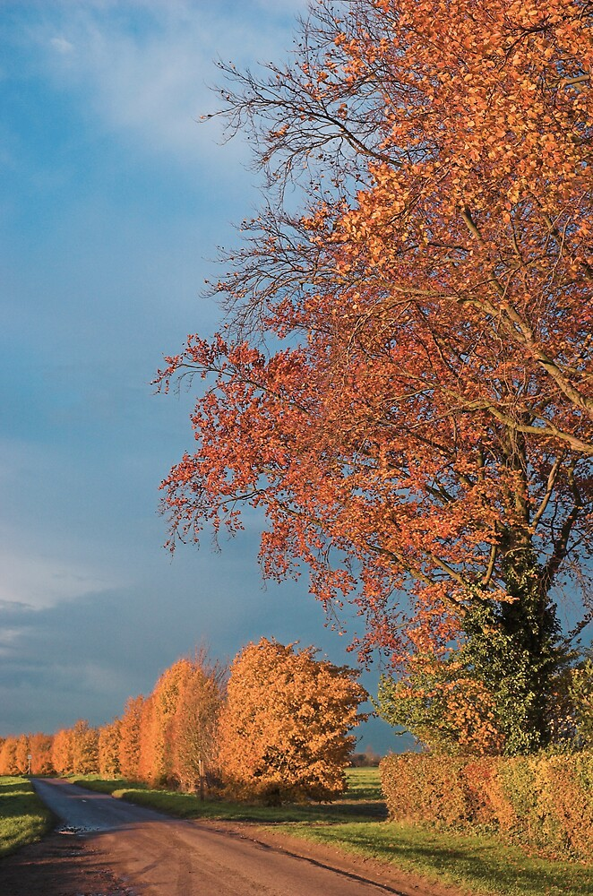 Autumn by Glenn Mason
