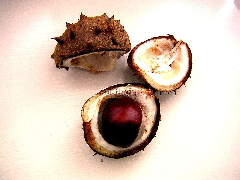 autumn conkers or chestnuts by gothgirl
