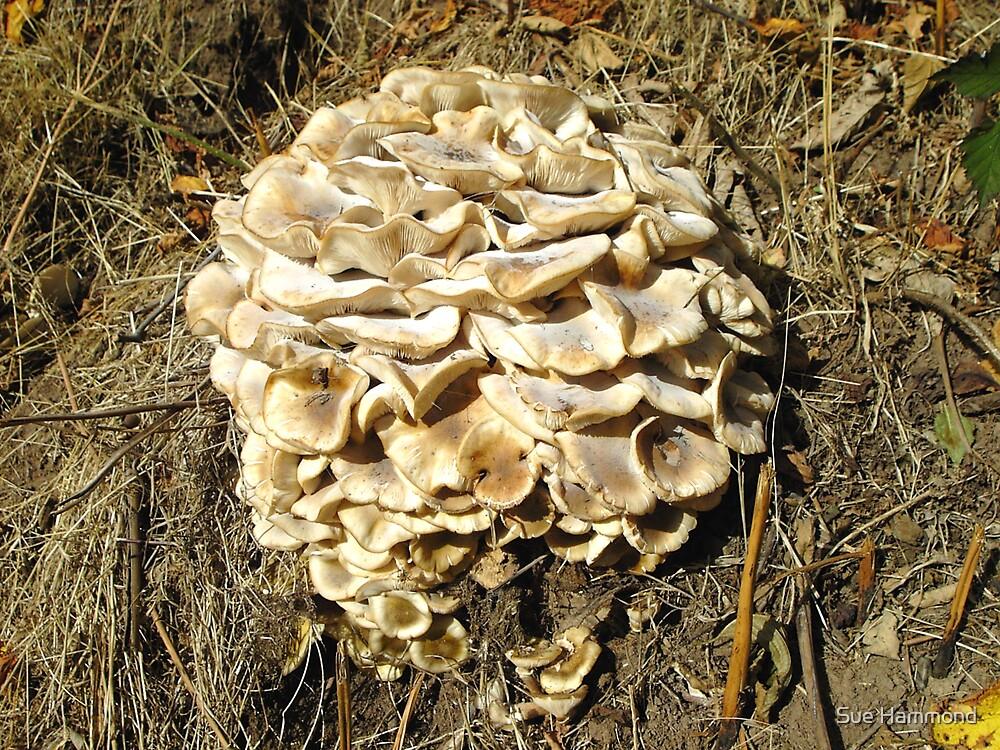 Large fungus by Sue Hammond