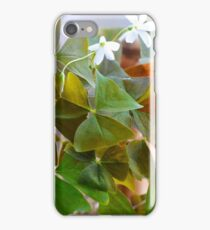 False Clovers in the Sun iPhone Case/Skin