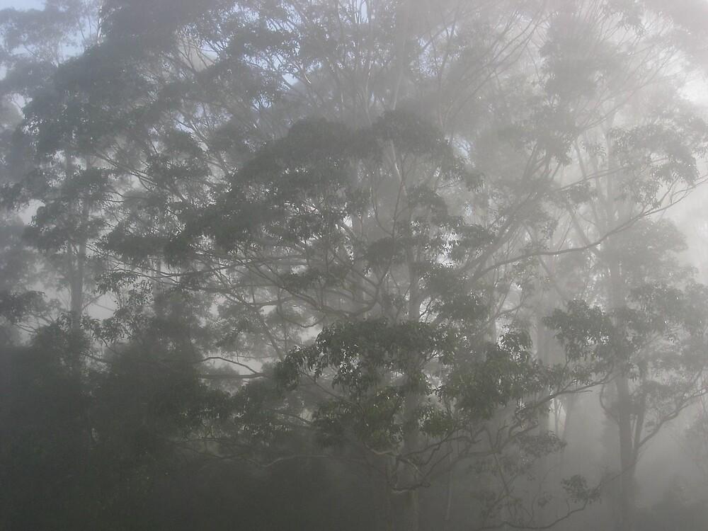 Mist 1 by drarnott