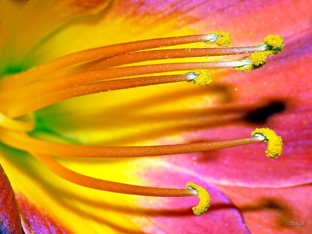 Pollen Pom Poms ! by robkal