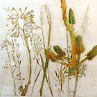 "Mornington Peninsula Grasslands 9 by Belinda ""BillyLee"" NYE (Printmaker)"