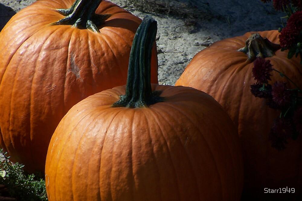 Pumpkins by Starr1949