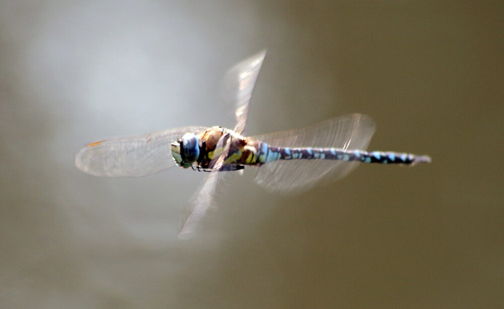 Dragonfly in Motion by Hayley Evans