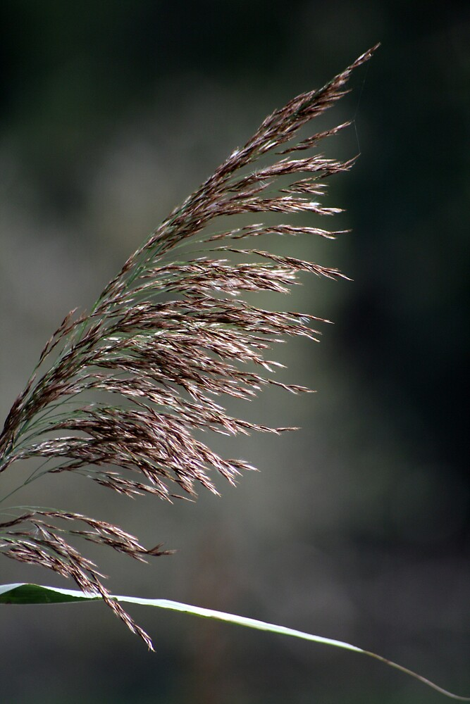 Reed in the wind by Hayley Evans