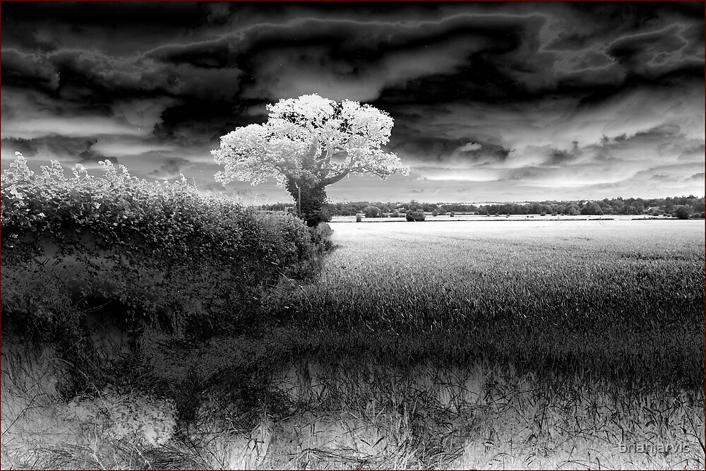 Cosgrove Farm- near the canal-B+W by brianjarvis