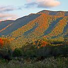 A Mountain View by Terri~Lynn Bealle
