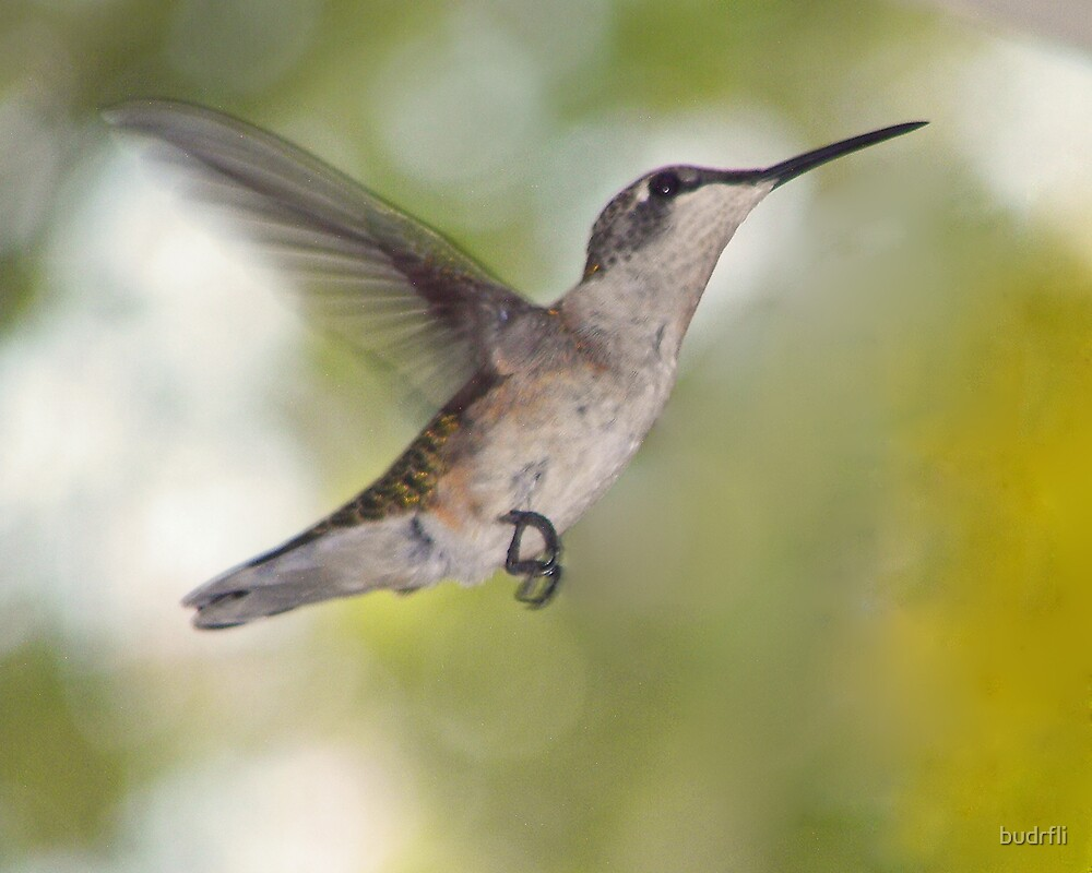 """'Lil"""" hummer by budrfli"""