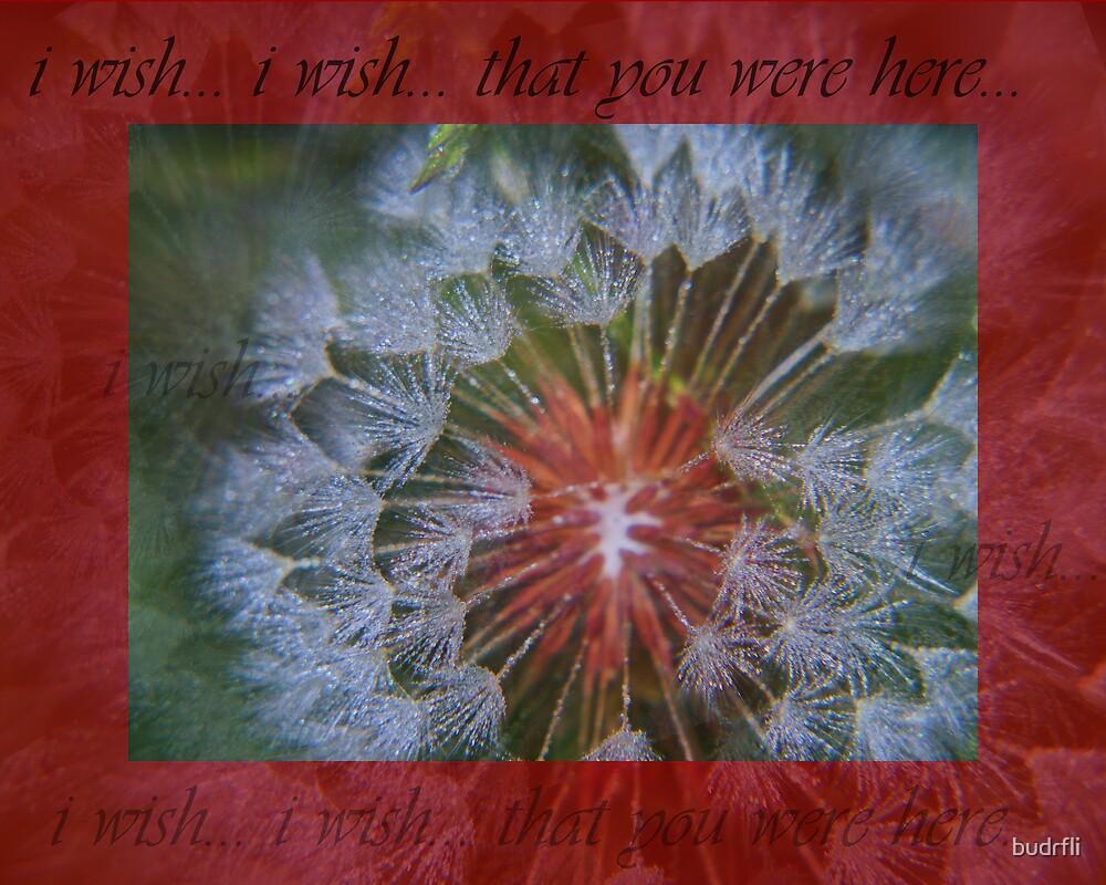 i wish...i wish... by budrfli