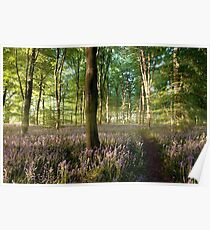 Sunrise in bluebell forest with little path Poster