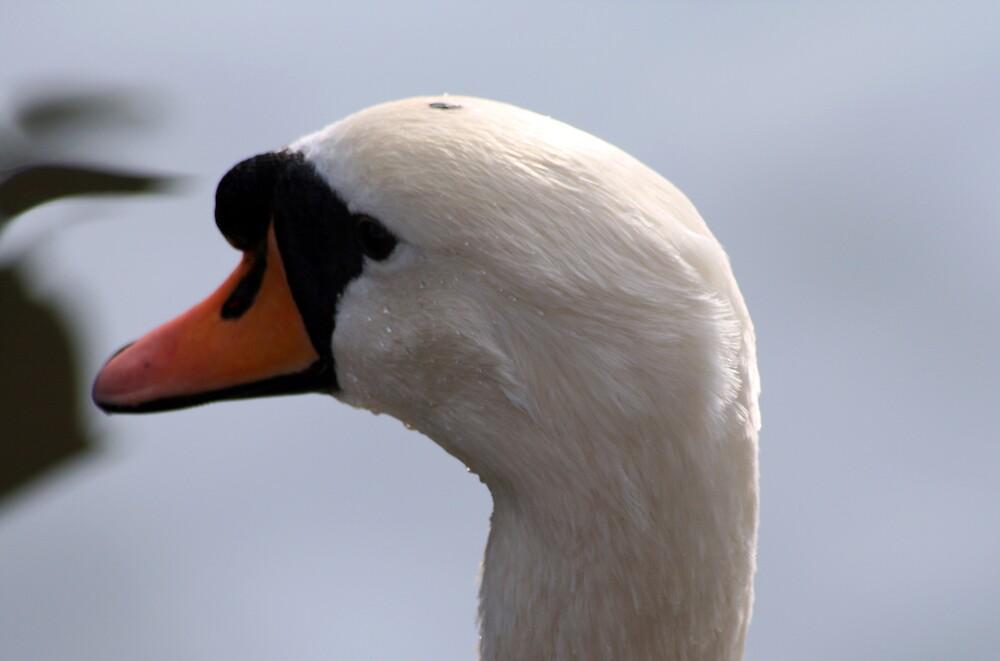 Swan Head by Hayley Evans