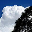 sky, cloud, tree by Mark Batten-O'Donohoe