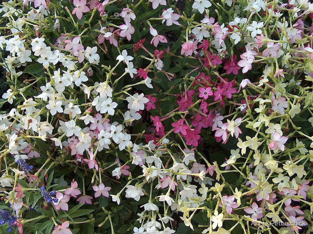 Flowers 1 by Annie Peterschick