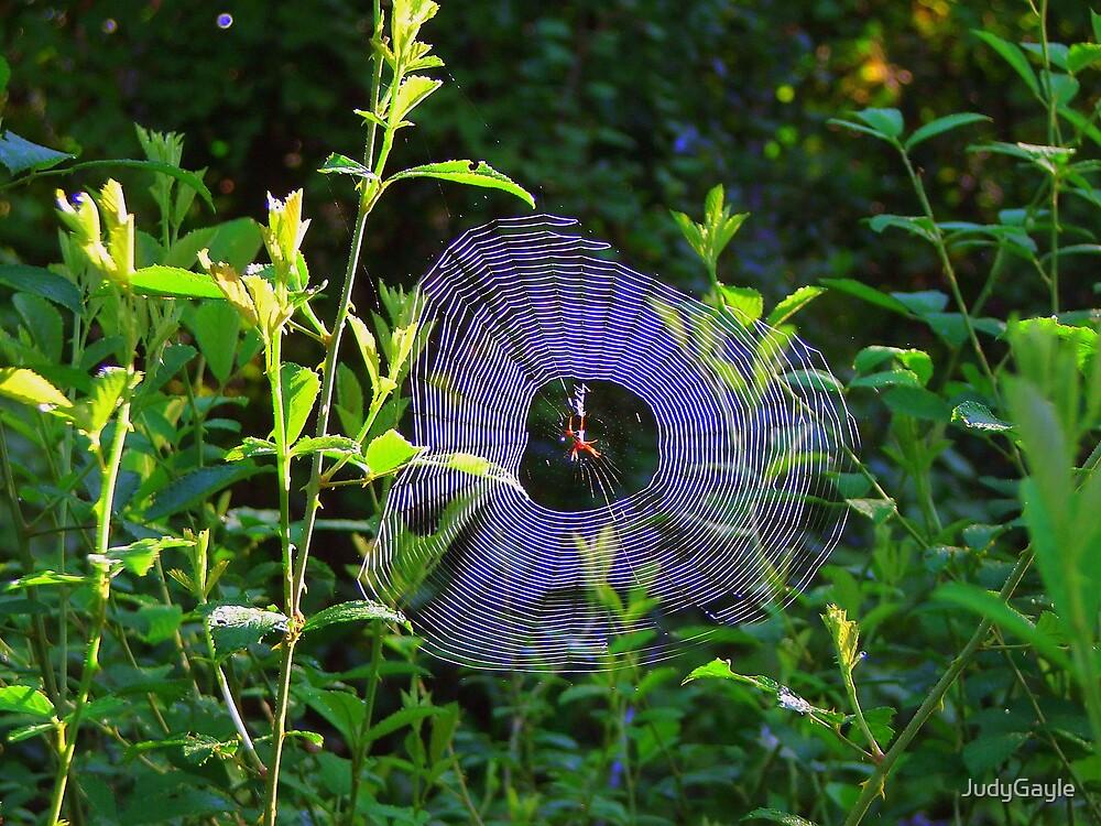 Natures Wonders by Judy Gayle Waller