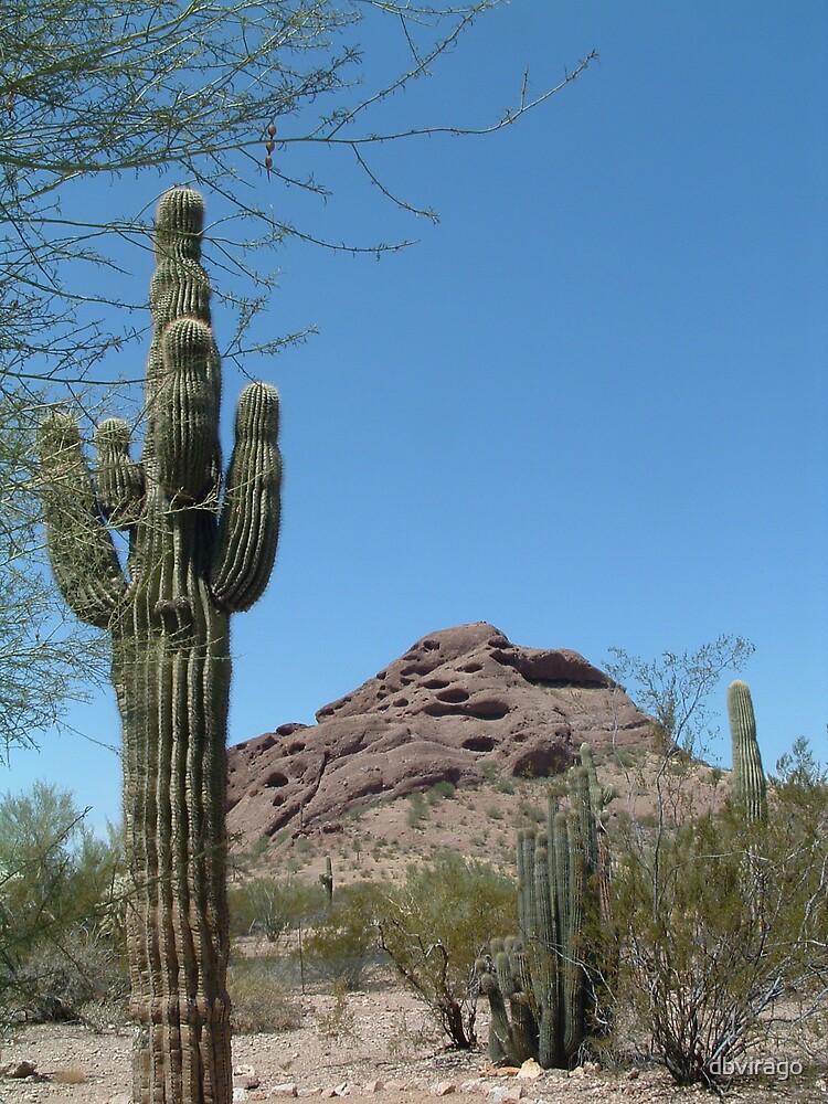 Arizona Desert by dbvirago