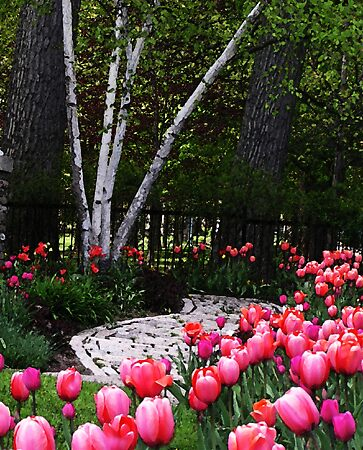Tulip Time by LindaLou1952