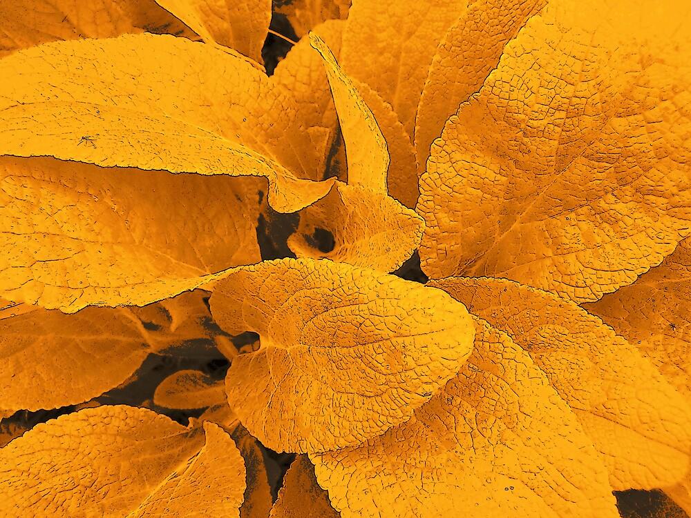 Orange Leaves by Gene Cyr