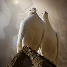 2 White Doves by ajgosling