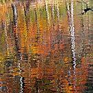 Mirror Mirror in the Water by Terri~Lynn Bealle