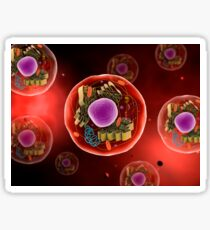 Microscopic view of animal cell. Sticker