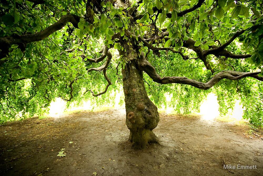 Weeping tree by Mike Emmett