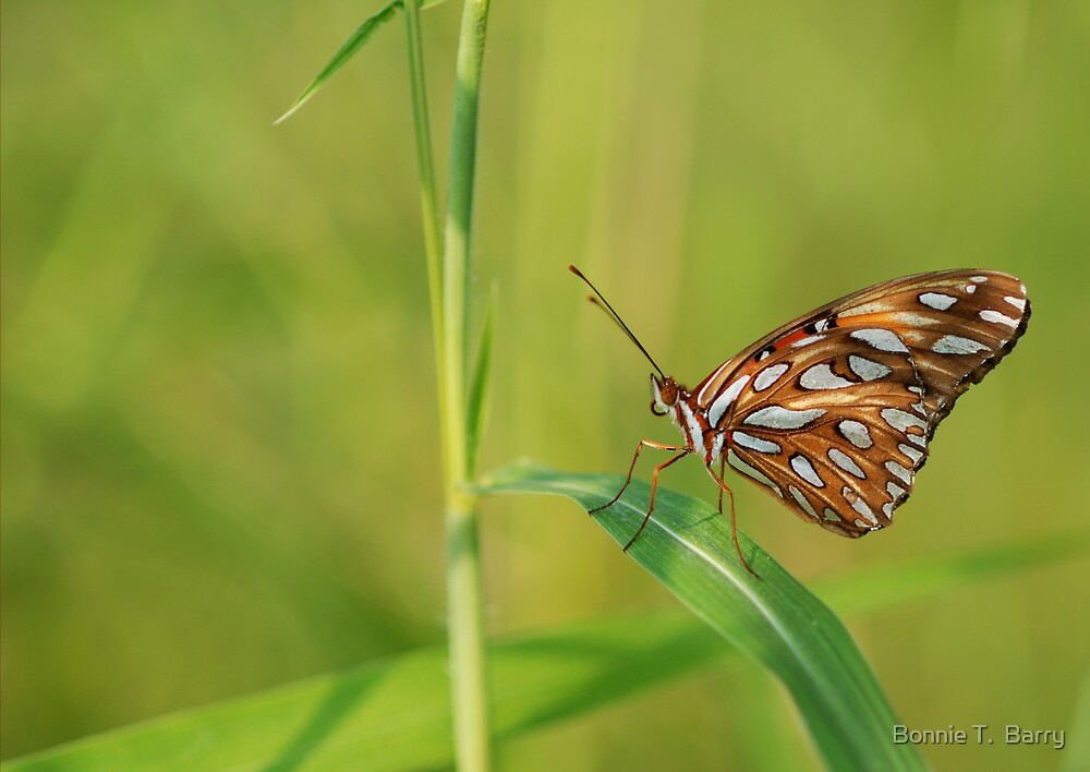Gulf Fritillary Butterfly by Bonnie T.  Barry