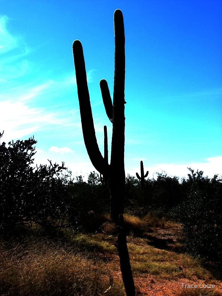 Majestic Saguaro by Trace Lowe