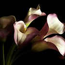 Cala lilies by Nick Alpin