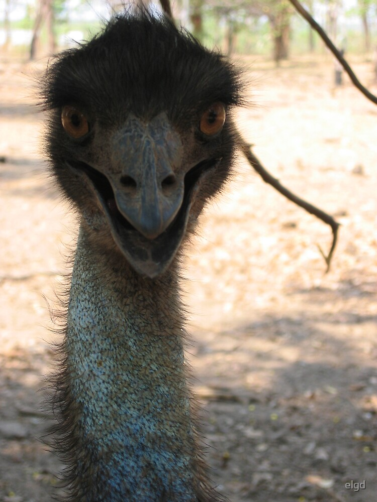 Emu Look At.... by elgd