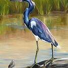 Louisiana Heron by Phyllis Beiser