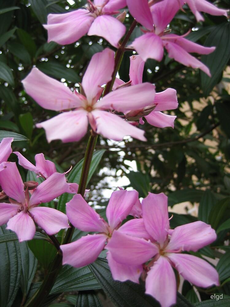 Purple Flower by elgd