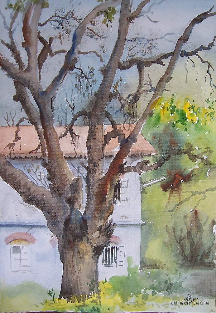 tree infront by suresh pethe