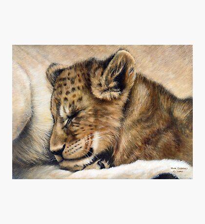 Lion cub on mum's tum Photographic Print