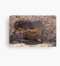 Donkey in the Shade Metal Print