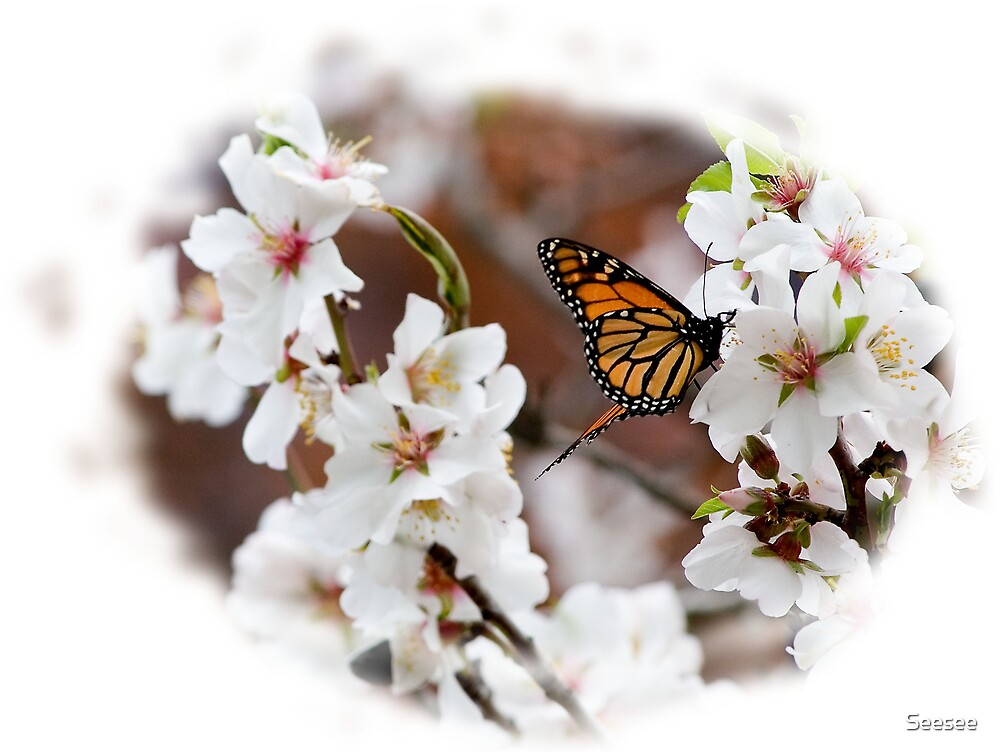 Butterfly On Blossom 4 by Seesee