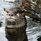 Otter by Moth
