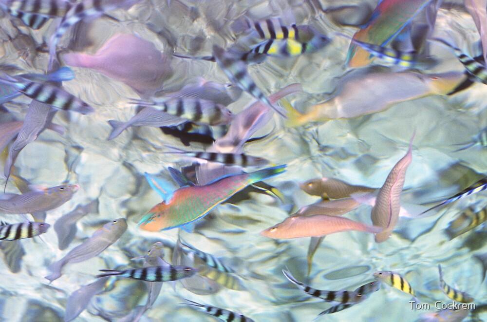tropical swirl by Tom  Cockrem