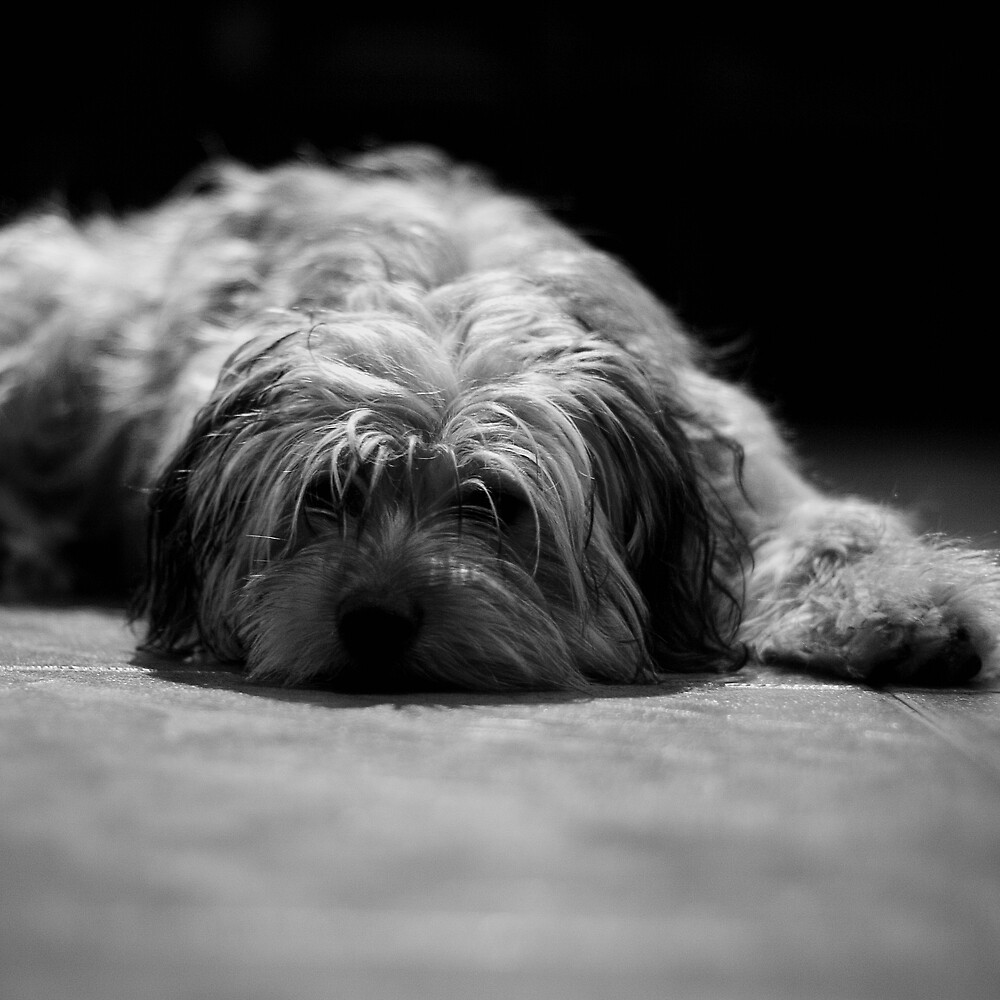 Tired pup by Victor Bezrukov