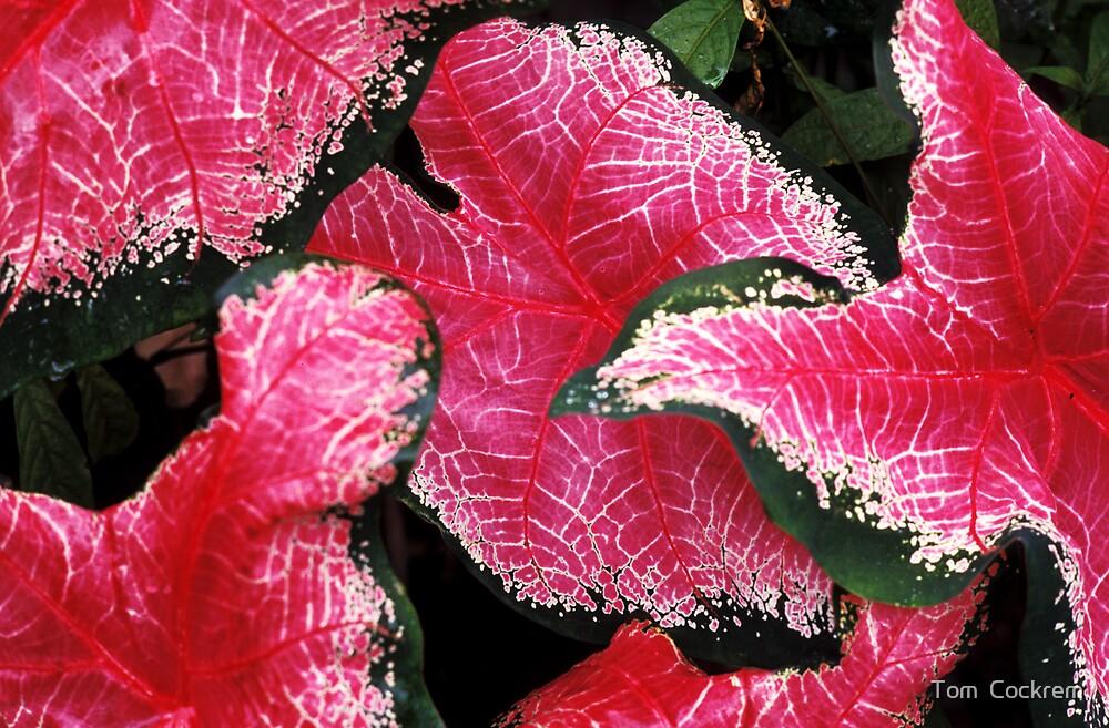 vibrant leaves  by Tom  Cockrem