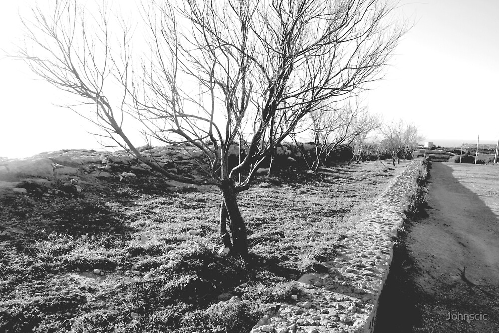Bare Trees by Johnscic
