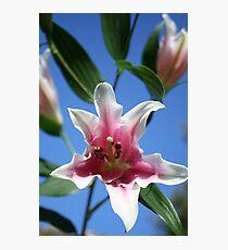 Lillies Photographic Print