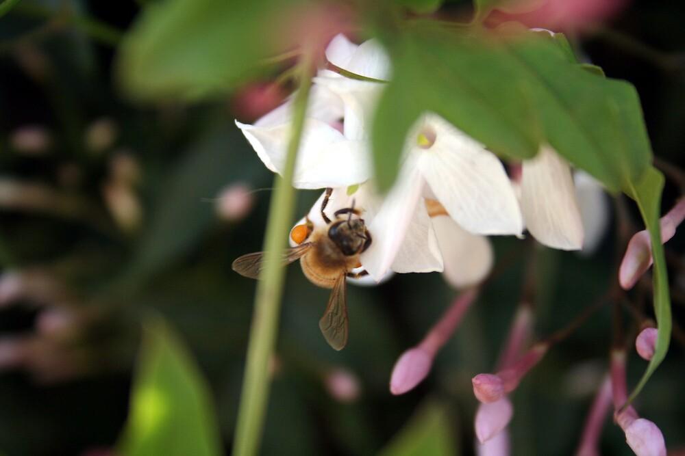 bees by sherryn pitt