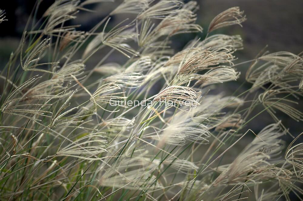 Grass7924 by Gwenda  Harvey