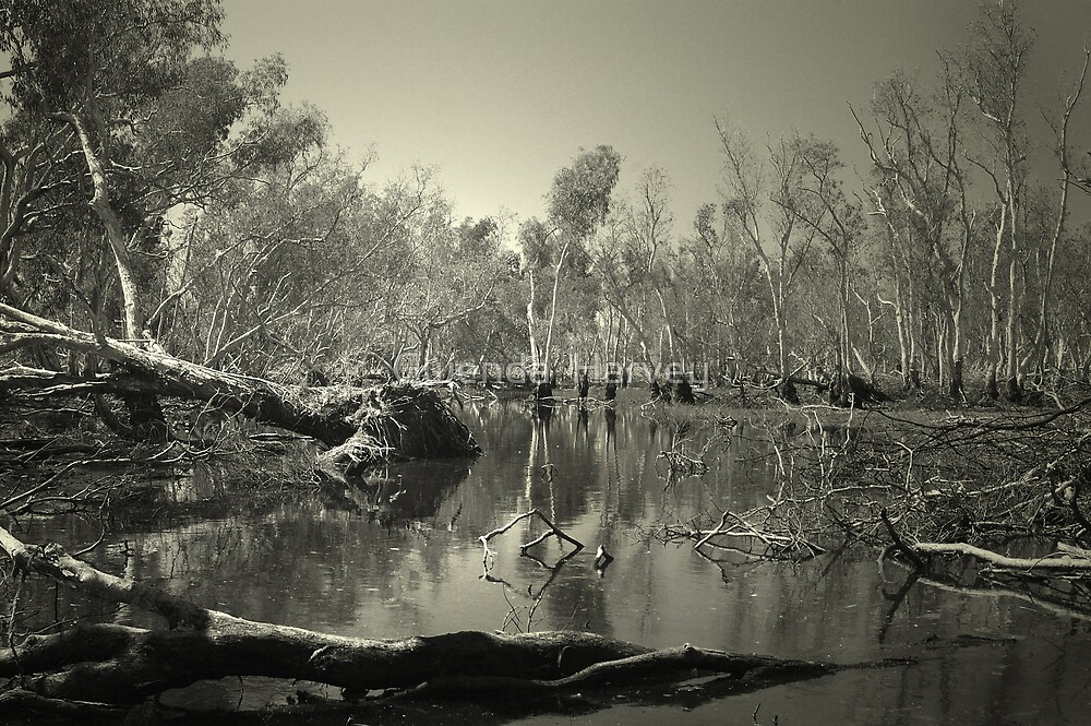 Australia,NT.5954 by Gwenda  Harvey